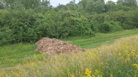 Hnijuca trava za hradzou