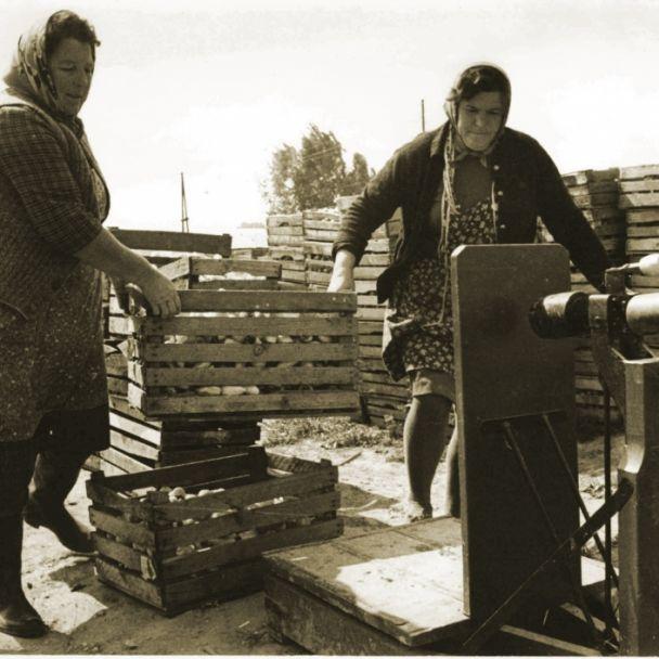Historické - Poľnohospodári v obci