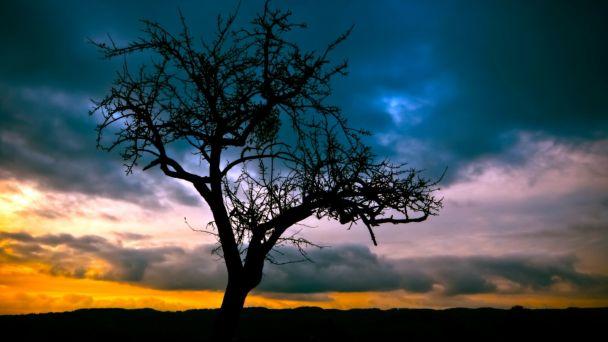 Orez a výrub stromov