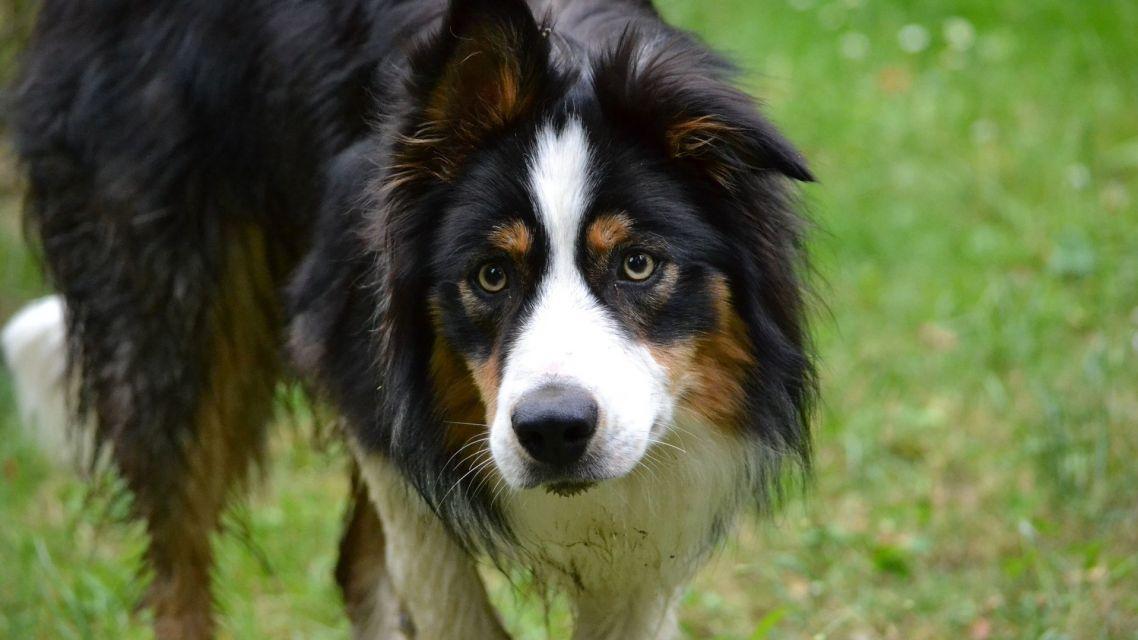 Oznam - Očkovanie a  a čipovanie psov